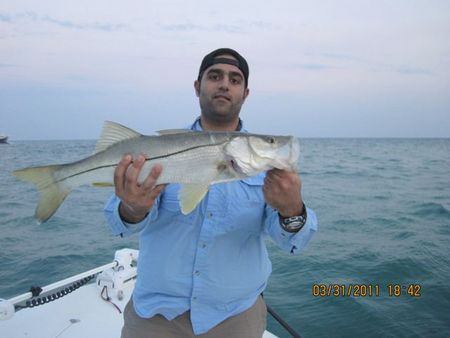 Best Rods For the Money
